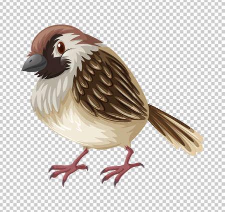 Sparrow bird on transparent background illustration