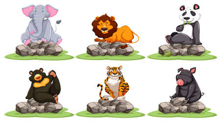 tropical: Different types of wild animals on rocks illustration