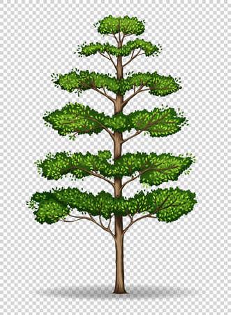 Tall tree on transparent background illustration
