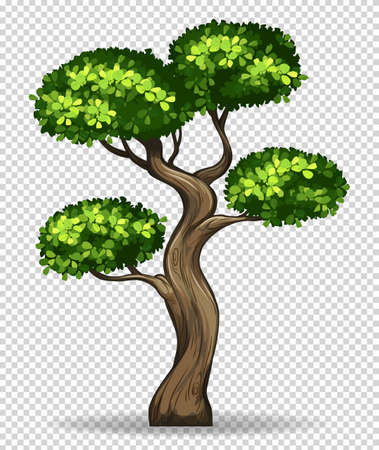 green environment: Bonsai tree on transparent background illustration Illustration
