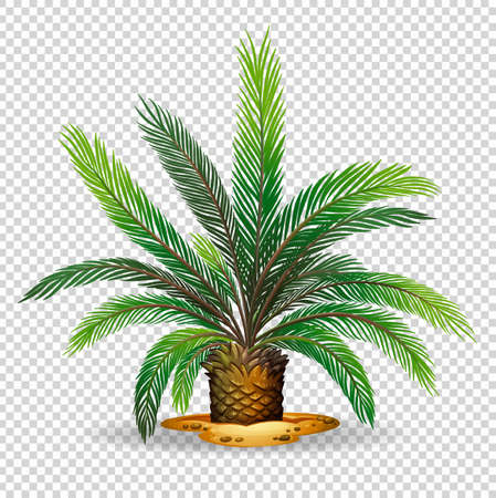 Palm tree on transparent background illustration