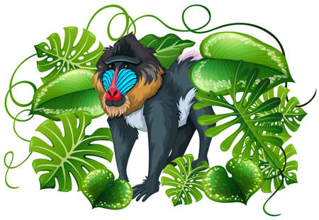 baboon: Baboon in green leaves illustration Illustration