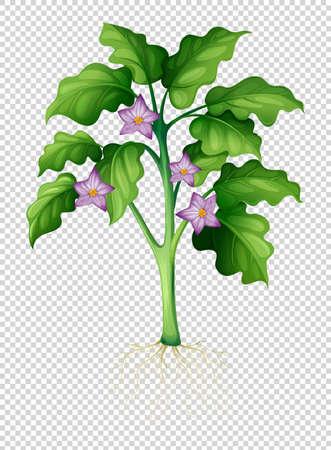 brown: Eggplant tree on transparent background illustration Illustration