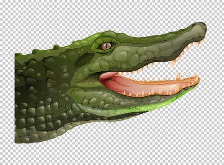 alligator isolated: Crocodile head on transparent background illustration Illustration