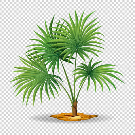 tropical: Palm tree on transparent background illustration