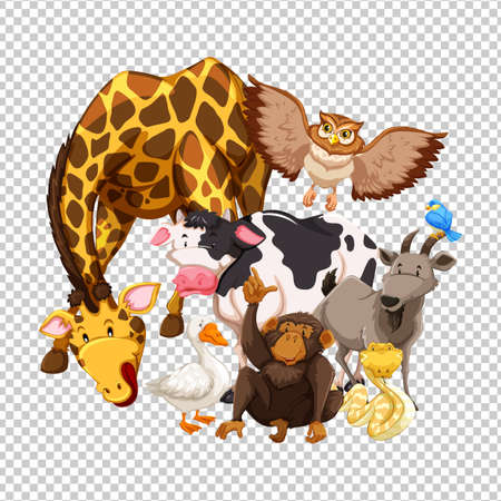 Many wild animals on transparent background illustration