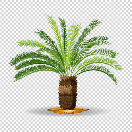 tropical: Type of palm tree on transparent background illustration