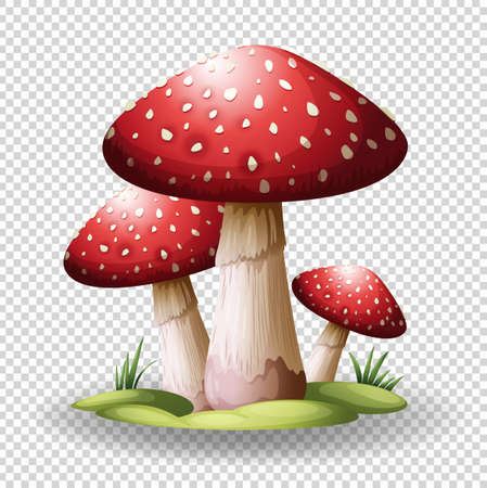 Red mushrooms on transparent background illustration