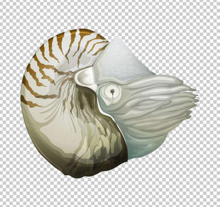 Sea nautilus on transparent background illustration Ilustração