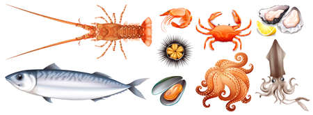 Different types of seafood illustration