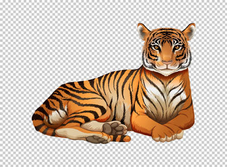 image: Wild tiger on transparent background illustration