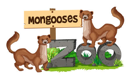mongoose: Mongooses standing on zoo sign illustration Illustration
