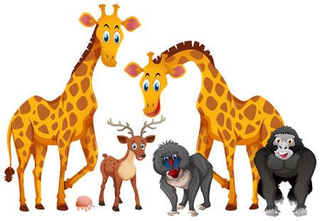 Giraffes and monkeys on white background illustration