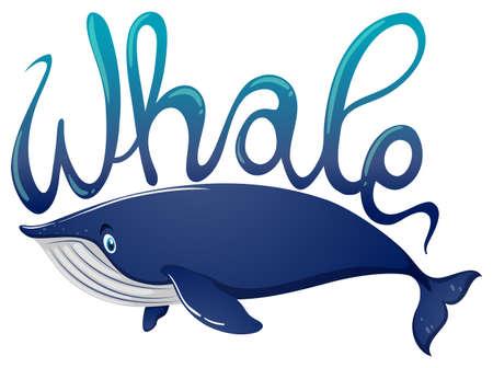 白い背景イラストをクジラとシロナガスクジラの単語