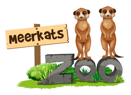 Two meerkats by the zoo sign illustration Illustration