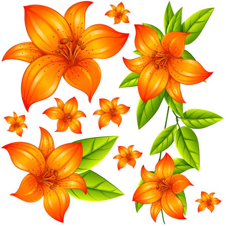 Wild flower in orange color illustration Illustration