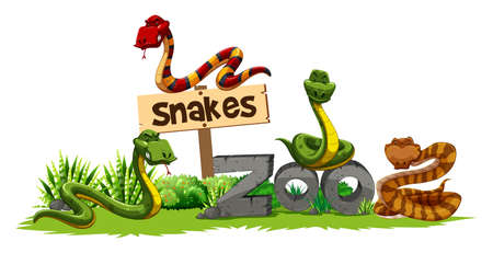 Four snakes in the zoo illustration Illustration