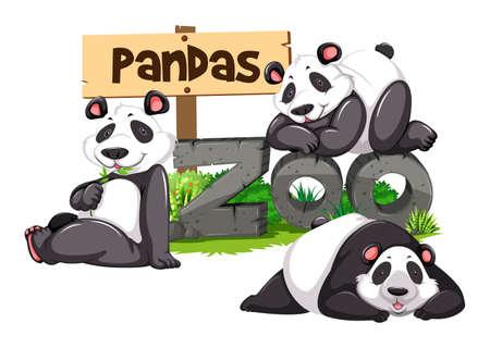 Three pandas in the zoo illustration