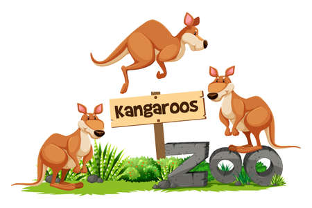Three kangaroos at the zoo sign illustration Illustration