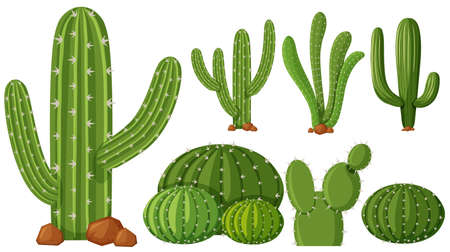 types of cactus: Different types of cactus plants illustration