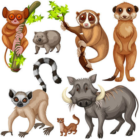 Different types of wild animals on white background illustration