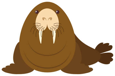 Sea lion on white background illustration Illustration