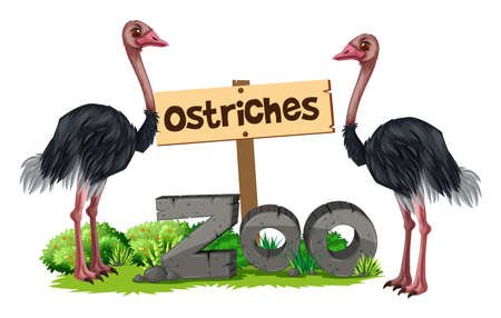 Ostriches at the zoo illustration