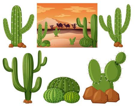 camel desert: Desert field with cactus plants illustration