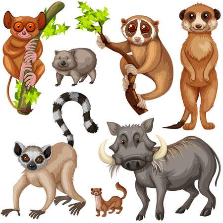 Diferentes tipos de animales salvajes en la ilustración de fondo blanco Vectores