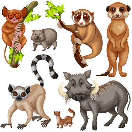 mongoose: Different types of wild animals on white background illustration