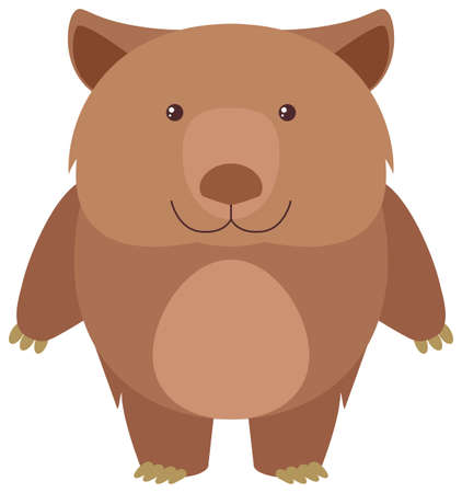 Koala oso en la ilustración de fondo blanco Vectores