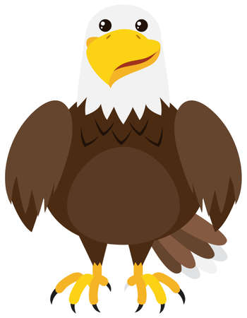 drawings image: Brown eagle on white background illustration Illustration
