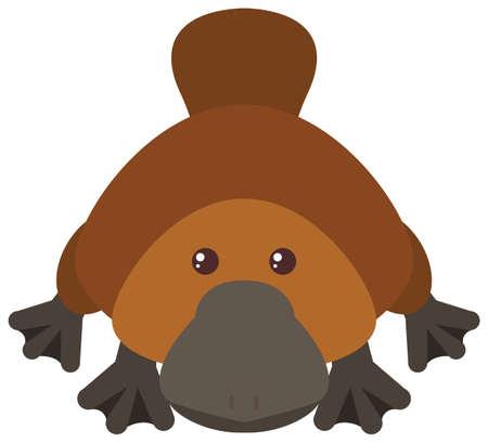 Platypus on white background illustration