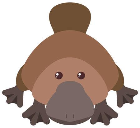 Cute platypus on white background illustration