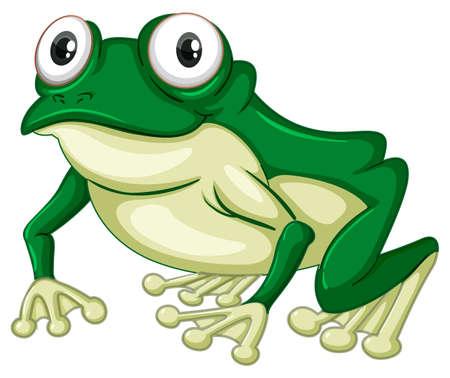 Green frog on white backgound illustration