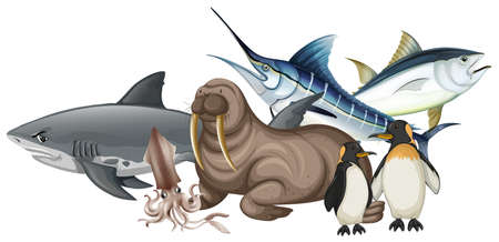 Different types of sea animals on white illustration Vectores