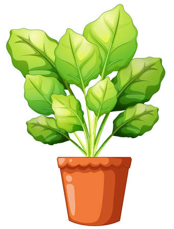 Green plant in clay pot illustration