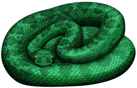 Green rattlesnake on white background illustration. Illustration