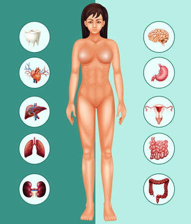 Woman and different organs illustration