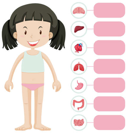 Little girl and different parts of body illustration
