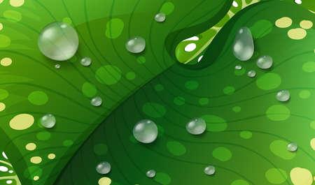 Waterdrops on green leaf illustration Illustration