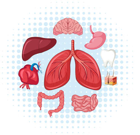 Human organs on poster illustration