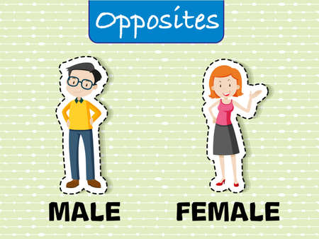 Opposite words for male and female illustration