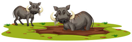 Two Boars Playing in Mud illustration