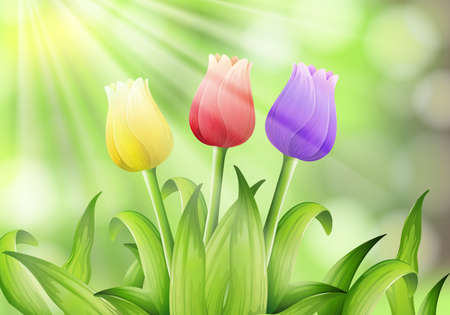 Colourful Tulip in Nature Background illustration