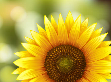 Beautiful Sunflower on Nature Background illustration