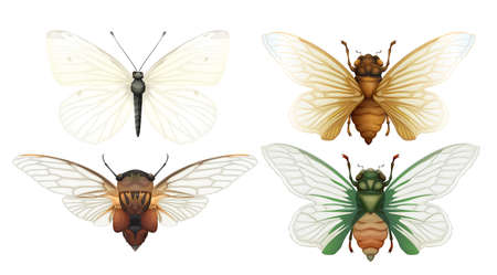 Cicada Insect Vector on White Background illustration