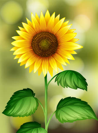 A Sunflower on Nature Background illustration