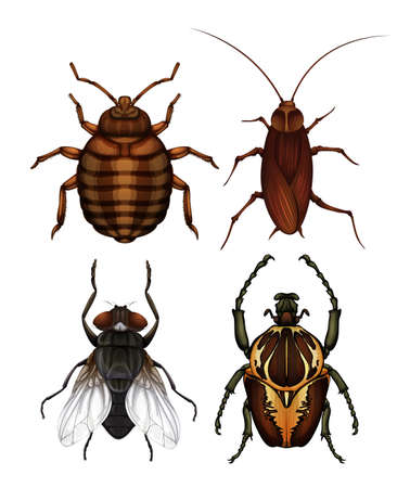 A Set of Disease Insect illustration