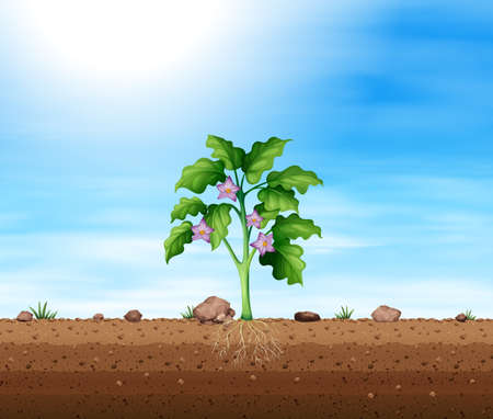 Plant with purple flower illustration